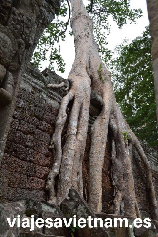 angkor-wat-arbol-gigante-en-muralla