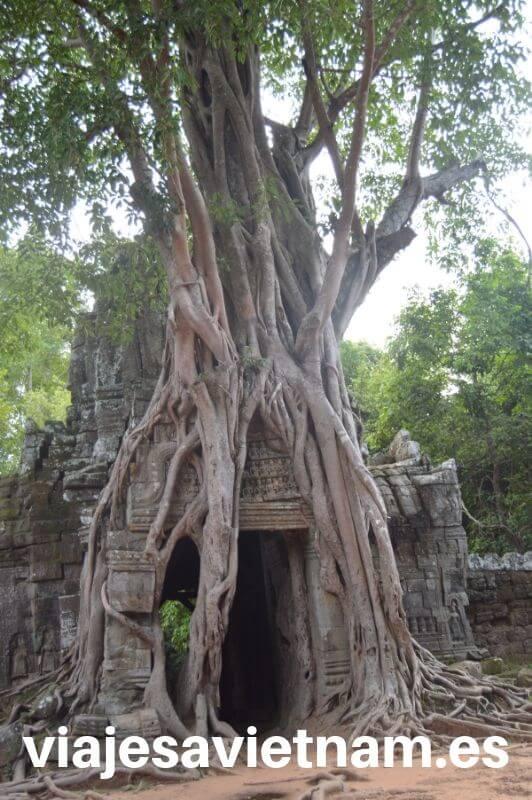 puerta-angkor-wat-arbol-gigante-crece