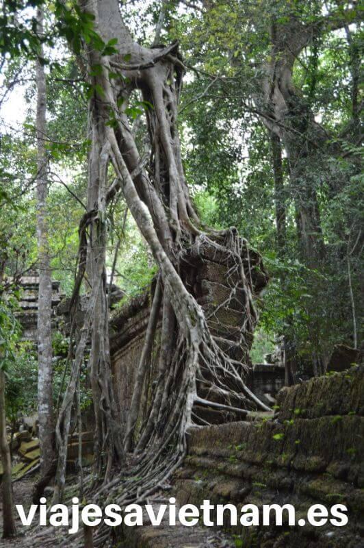 arboles-apoyados-en-muralla-angkor-wat