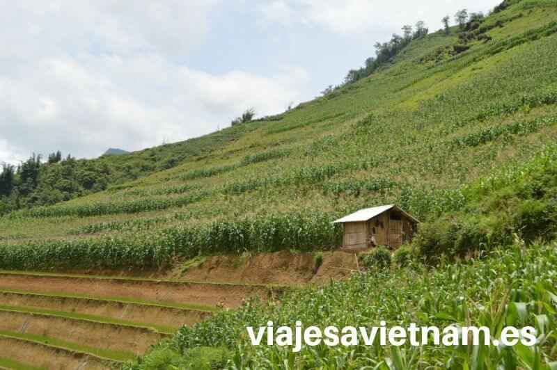 sapa-terraza-arrozales